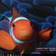 FishCalendars.com 2016 Calendar Theme