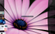 Emerge Desktop 64bit