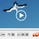 Windows Video Media Player