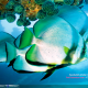Fish Calendar Windows Theme